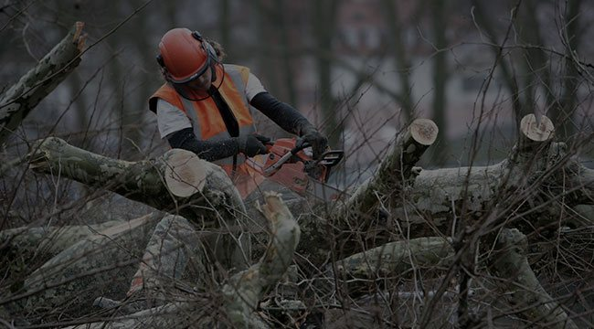Cleveland Tree Service