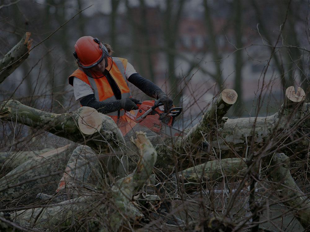 Beachwood Tree Removal